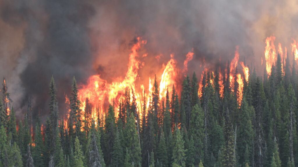 Shovel Lake fire is 79,000 hectares