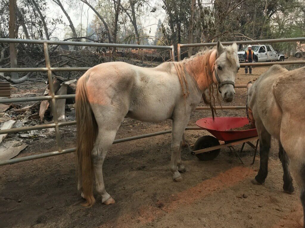 Horses saved in Paradise